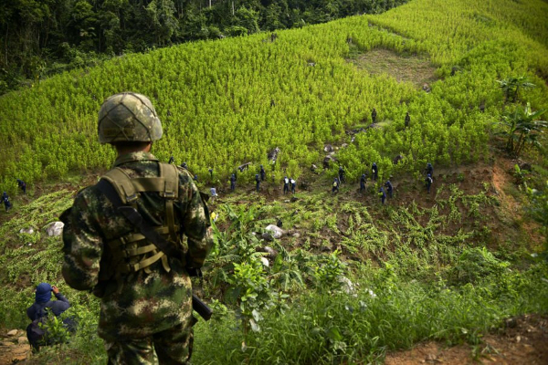 colombia coca eradication